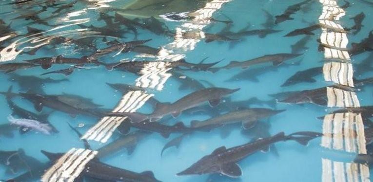 перевозка живой рыбы цена в фишфарм