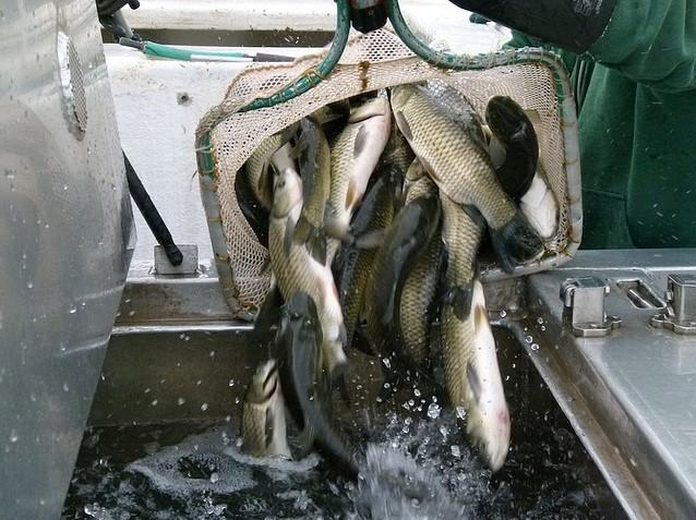 перевозка живой рыбы особенности