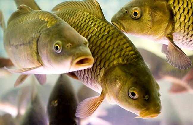 рыбхоз белгород